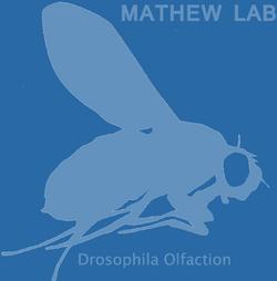 Mathew Lab