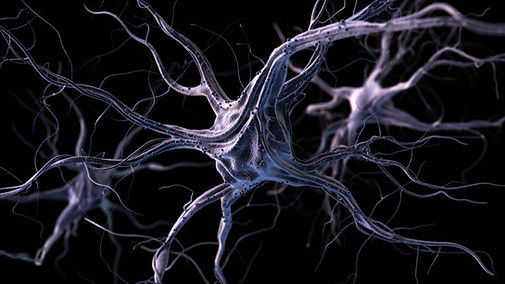 giant-neurons-seat-of-consciousness-brai