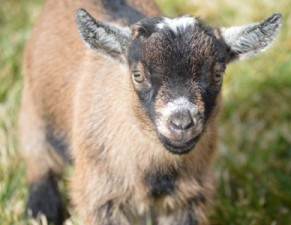 Welcome to Happy Trails Goat Farm Blog