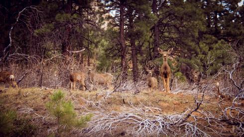 nature 27.jpg