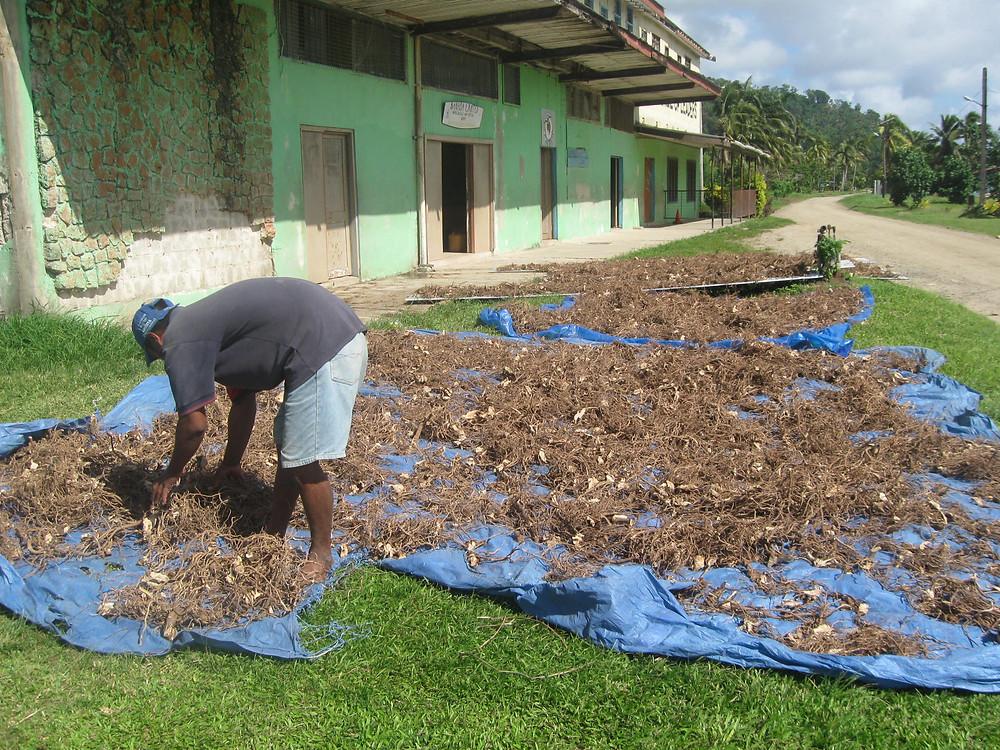 Dried Kava roots (waka), Rabi Fiji