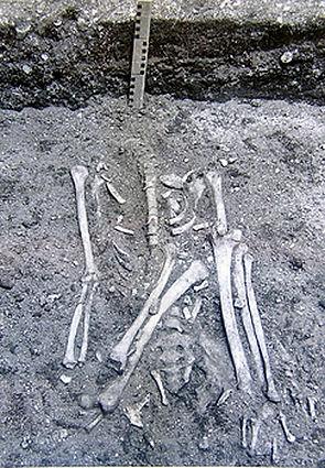 Te Aka skeletal remains recovered