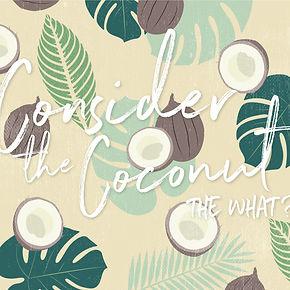 Moana Coconut Desktop and Phone Wallpaper