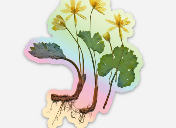 Buttercup Bloodroot Holographic Sticker