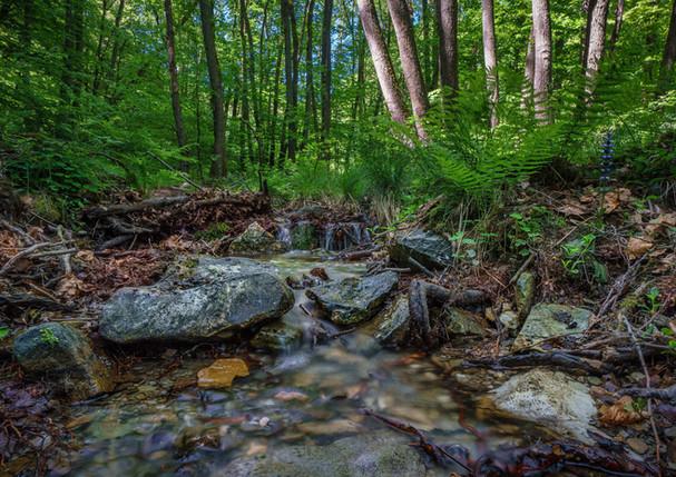 Wasserschutzprojekte_1.jpg
