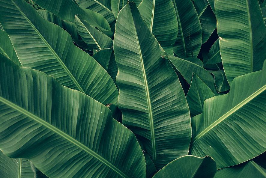 Verde Foresta Design Interior