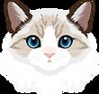 grumpy cat.png