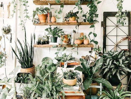 Plants that brighten up your space and mood.
