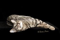 20160220_San Gabriel Valley Cat Fanciers-406-Edit