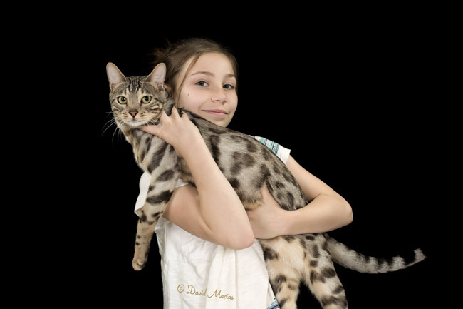 20160220_San Gabriel Valley Cat Fanciers-409-Edit