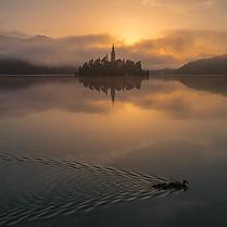 Ducks on Lake Bled (1 of 1).jpg