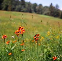 VT Wildflowers (1 of 1).jpg