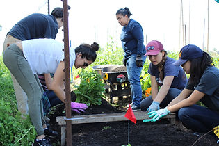 Volunteer at Gill Tract Community Farm