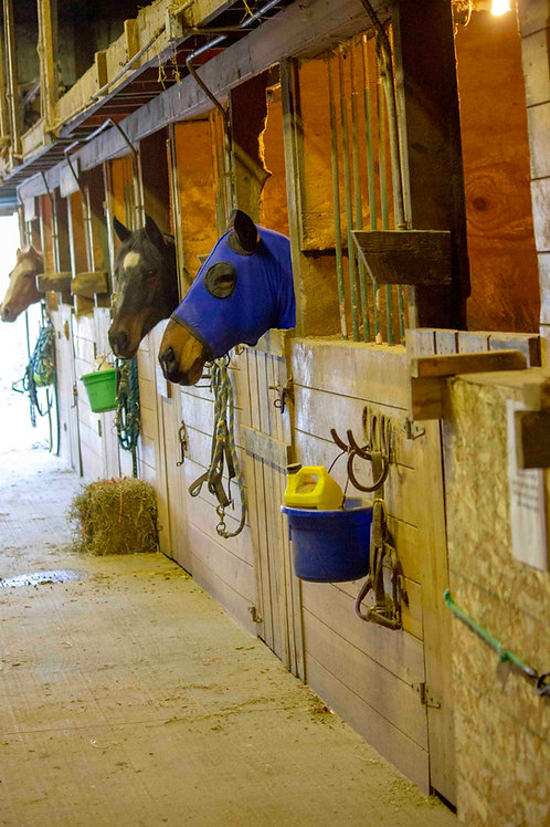 Full Care Horse Board