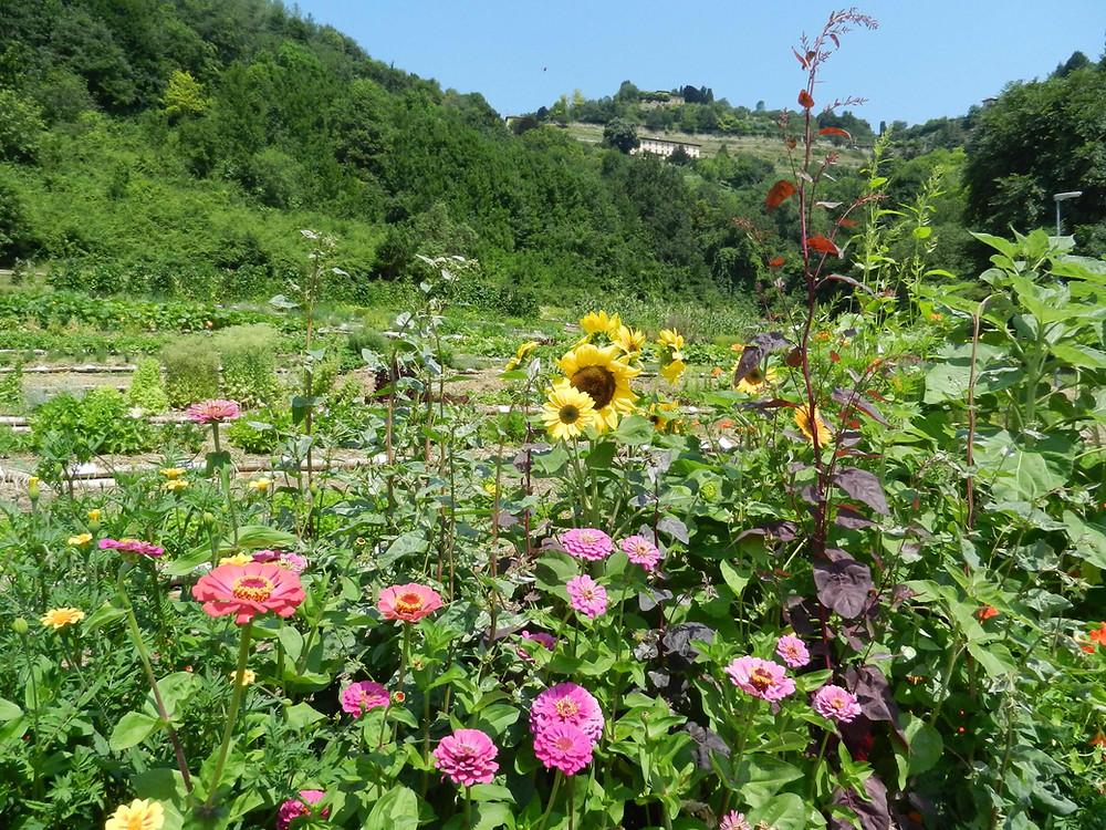 Valle della biodiversità Astino Bergamo Orto botanico Lorenzo Rota