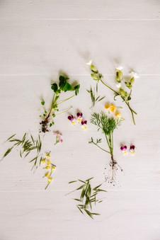 Plants-117.jpg