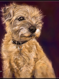 Keira, Border Terrier_