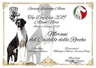 Morani DCDR TOP DOG SIA 2019