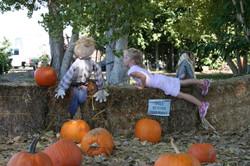 Autumn Festival at South Coast Farms