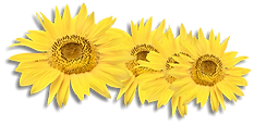 sunflowers_edited.png