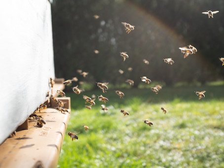 Winter is Coming: Critical Tips for Summer Hive Health