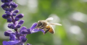 635938339093727386-honeybee.jpg