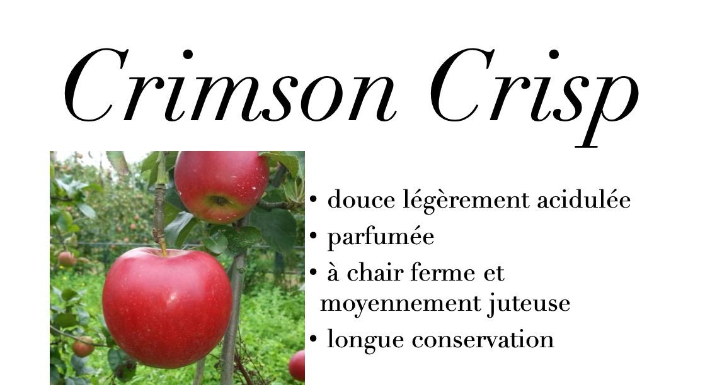 Crimson Crisp