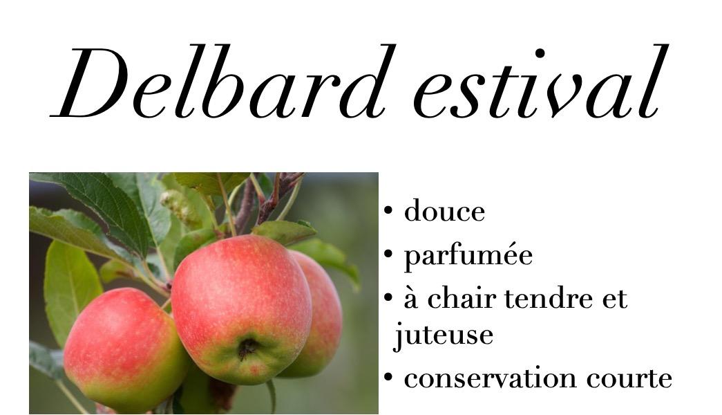 Delbard Estival