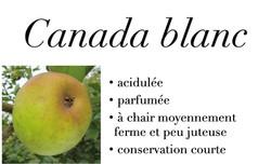 Canada blanche