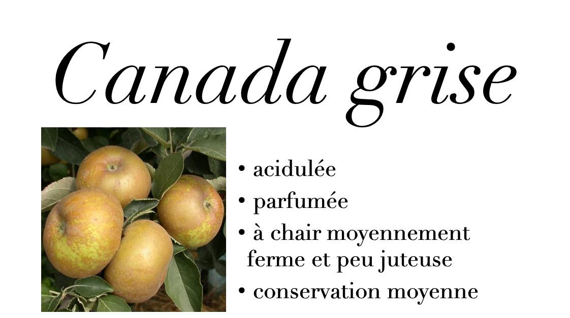 Canada grise
