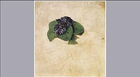 Dürers_Pflanzenstudie.jpg