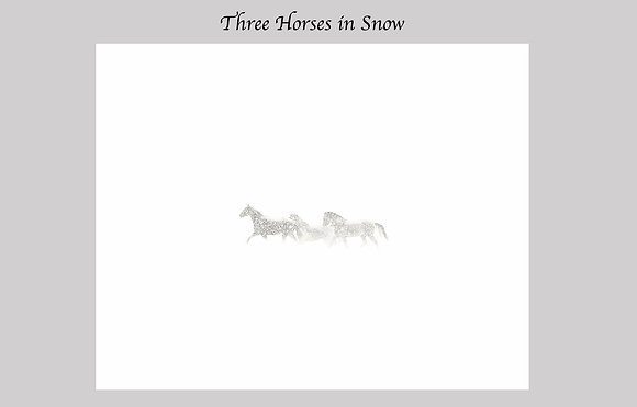 three horses running in snow storm, Montana, Mission Valley, Black and White