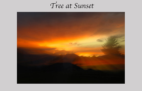 sunset during forest fire, tree, bitterroot mountains, montana
