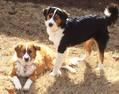 Lucy and Sam. Rescues turned Therapy Dogs