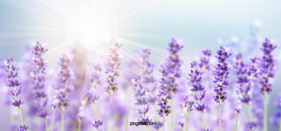 Purple lev..png