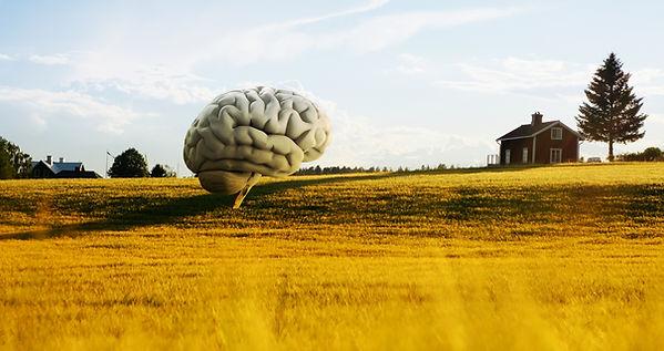 Brain field.jpg