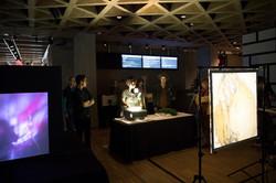 Gallery+Lumia-019