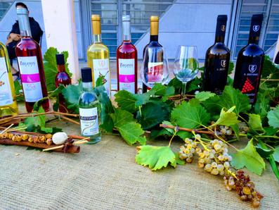 2η Γιορτή Κρασιού στον Μαραθώνα, 2019