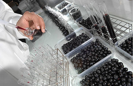 winelab (3).jpg