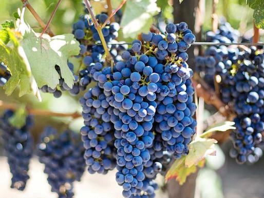 """""""Τα κρασιά της Νέμεσις"""" από το περιοδικό We love Marathon"""