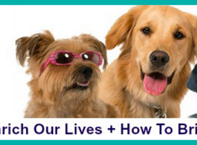 Sheri Explores the Amazing Bond with Animals on Talent Hounds Blog