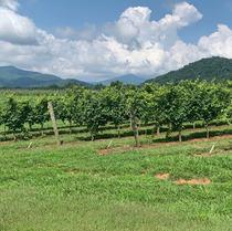 Hark Vineyards