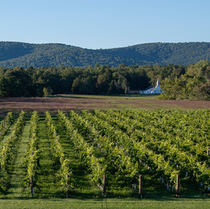 Merrie Mill Farm & Vineyard