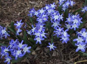 Early Spring Bulb Favorites