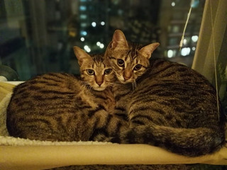 Pets 🐶🐰 of Sai Wan 😄: Fiona's kitties n her list to consider before becoming a cat parent 😻😻