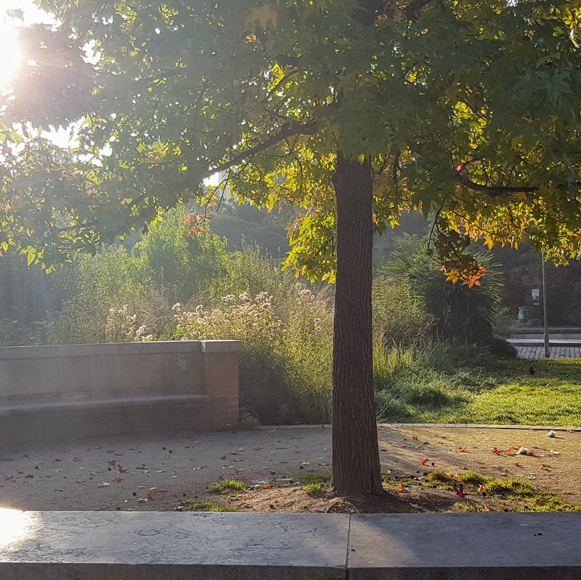 Maple tree in Parc de Bercy