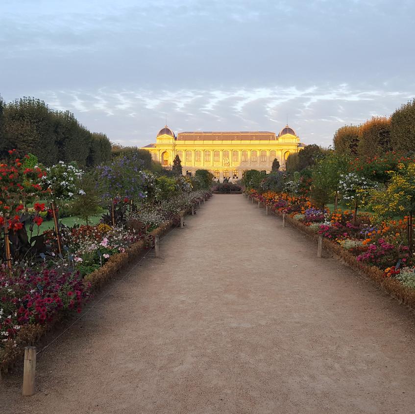 Le Jardin des Plantes at dawn