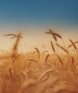 grain_edited.jpg
