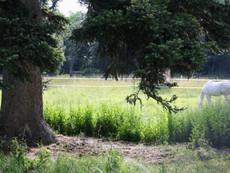 Piquecos - pasture