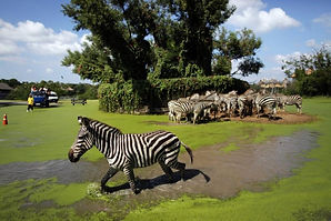 coupon-thailands-safari-world-submerged.